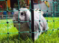 Kaninelnät Ovinet